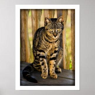 Retrato del gato de la concha, foto del animal del póster