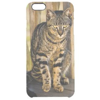 Retrato del gato de la concha, foto del primer funda clearly™ deflector para iPhone 6 plus de unc
