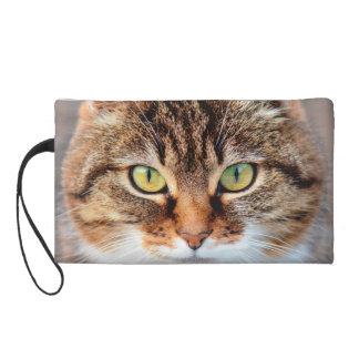 Retrato del gato de la Isla de Man de ojos verdes
