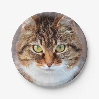 Retrato del gato de la Isla de Man de ojos verdes Plato De Papel De 7 Pulgadas