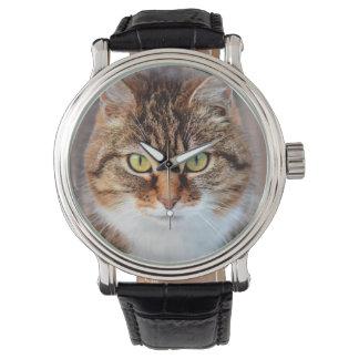 Retrato del gato de la Isla de Man de ojos verdes Reloj