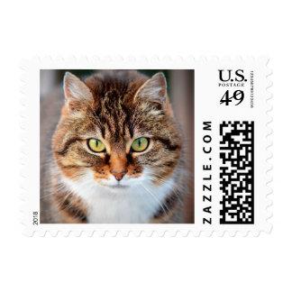 Retrato del gato de la Isla de Man de ojos verdes Envio