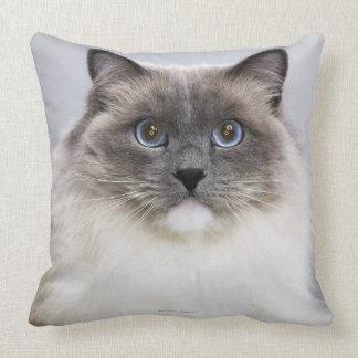 Retrato del gato de Ragdoll Cojín Decorativo