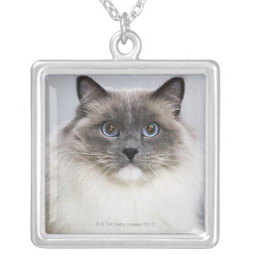 Retrato del gato de Ragdoll Colgante Cuadrado