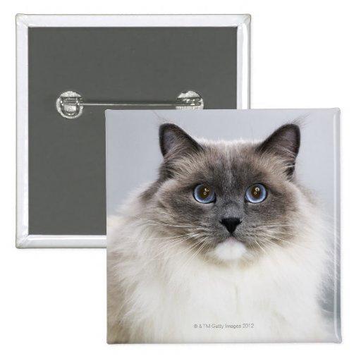 Retrato del gato de Ragdoll Pin