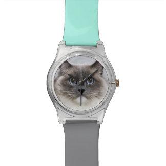 Retrato del gato de Ragdoll Relojes