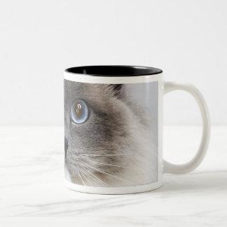 Retrato del gato de Ragdoll Taza De Café De Dos Colores