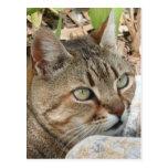 Retrato del gato de Tabby