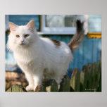 Retrato del gato en la cerca poster