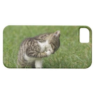 Retrato del gato iPhone 5 carcasa