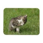Retrato del gato iman