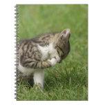 Retrato del gato libro de apuntes con espiral