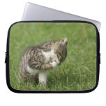 Retrato del gato mangas portátiles