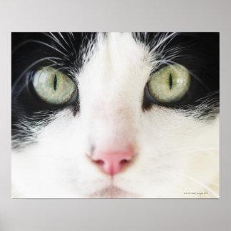 Retrato del gato nacional impresiones