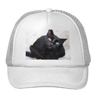 Retrato del gato negro gorro de camionero