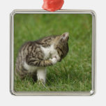 Retrato del gato ornamente de reyes