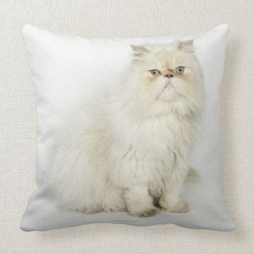 Retrato del gato persa almohada