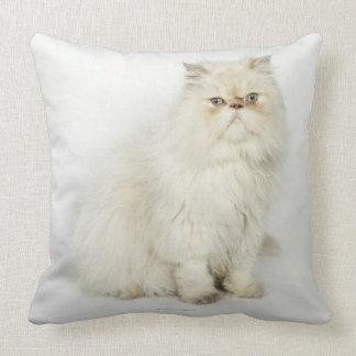 Retrato del gato persa almohadas