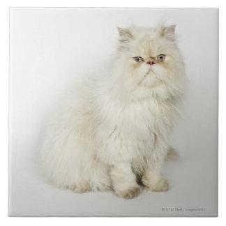 Retrato del gato persa azulejo cuadrado grande