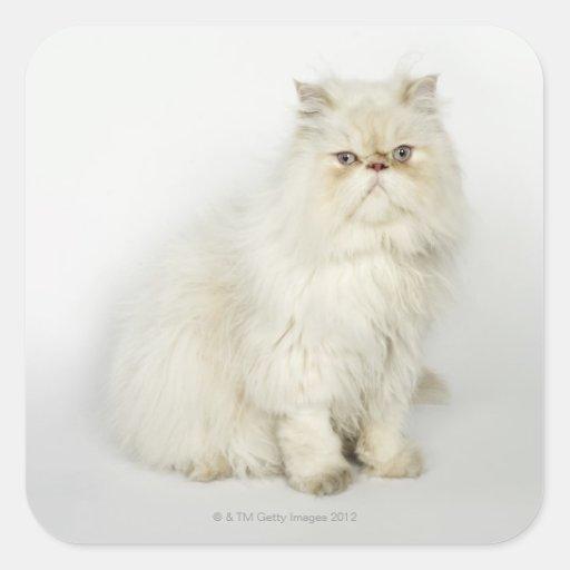 Retrato del gato persa calcomanía cuadrada