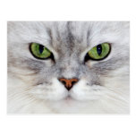 Retrato del gato persa - postal