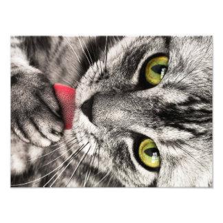 Retrato del gato arte fotografico