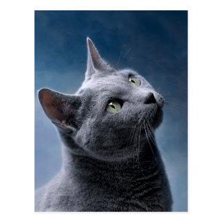 Retrato del gato postal