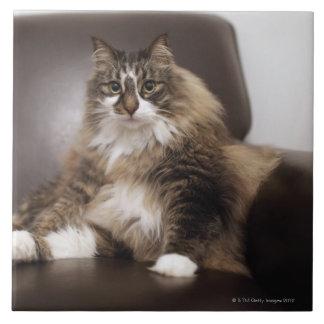 Retrato del gato que se sienta en silla azulejo cuadrado grande