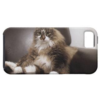 Retrato del gato que se sienta en silla iPhone 5 carcasas
