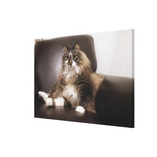 Retrato del gato que se sienta en silla impresiones de lienzo
