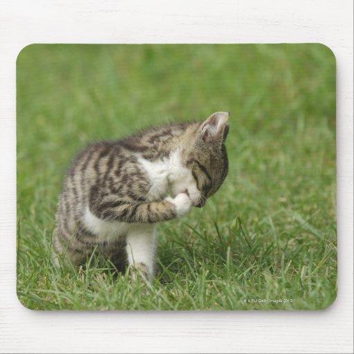 Retrato del gato tapetes de ratón