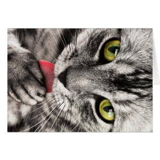 Retrato del gato tarjeta pequeña