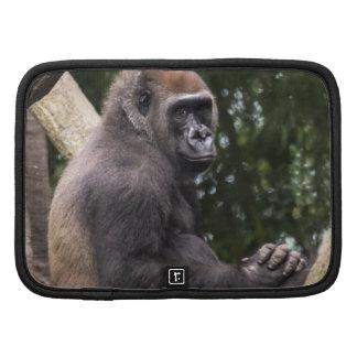 Retrato del gorila organizador
