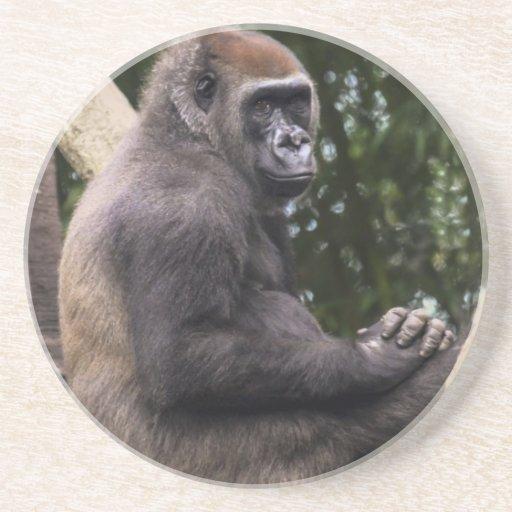 Retrato del gorila posavasos personalizados