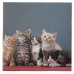 Retrato del grupo de gatitos azulejo cerámica