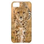 Retrato del guepardo (Acinonyx Jubatus), Maasai Funda Para iPhone 5C