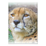 Retrato del guepardo invitaciones personalizada