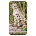 Retrato del guepardo que se sienta barely there iPod cárcasas