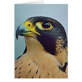 Retrato del halcón de Pelegrine Tarjeta De Felicitación