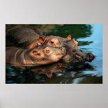 Retrato del Hippopotamus del cuidado de una madre Impresiones