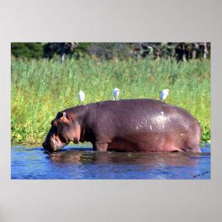 Retrato del Hippopotamus del transporte público Póster