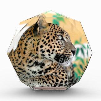 Retrato del jaguar