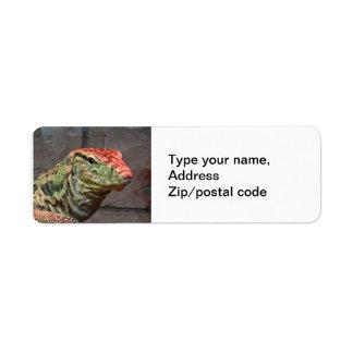 Retrato del lagarto de monitor etiquetas de remite