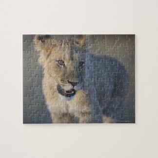 Retrato del león Cub (Panthera Leo), Namibia Puzzles Con Fotos