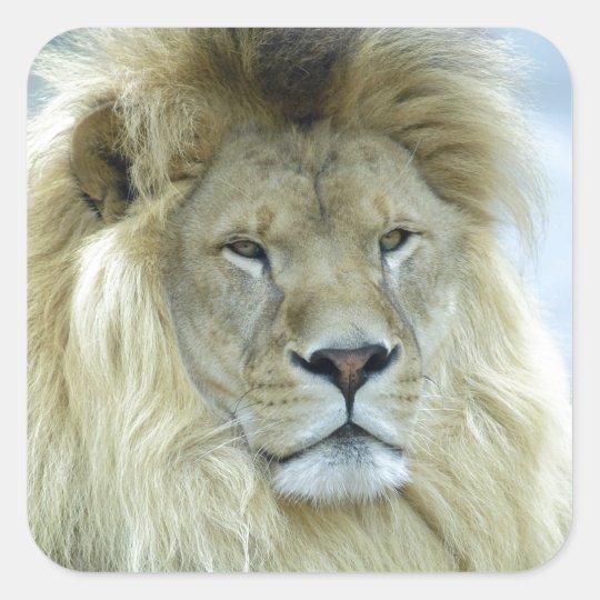 Retrato del león pegatina cuadrada