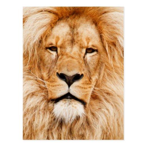 Retrato del león postal