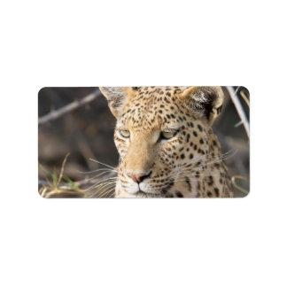 Retrato del leopardo etiquetas de dirección