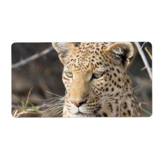 Retrato del leopardo etiquetas de envío
