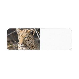 Retrato del leopardo etiqueta de remitente