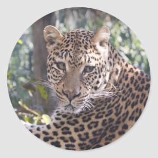 Retrato del leopardo etiqueta redonda